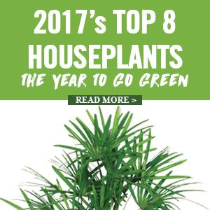2017 Top 8 Houseplants